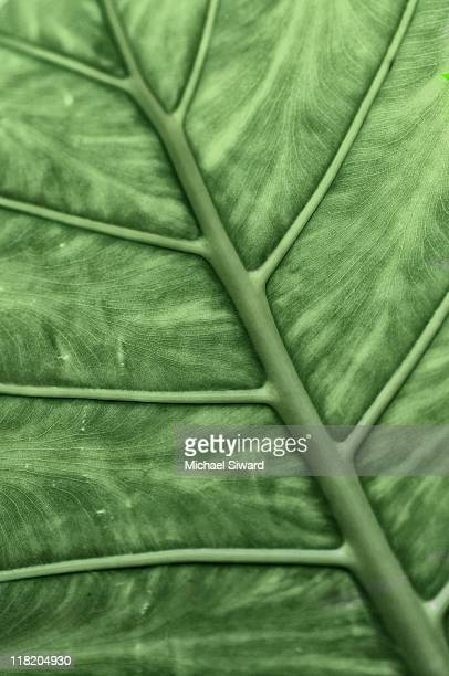 veins - michael siward stock pictures, royalty-free photos & images