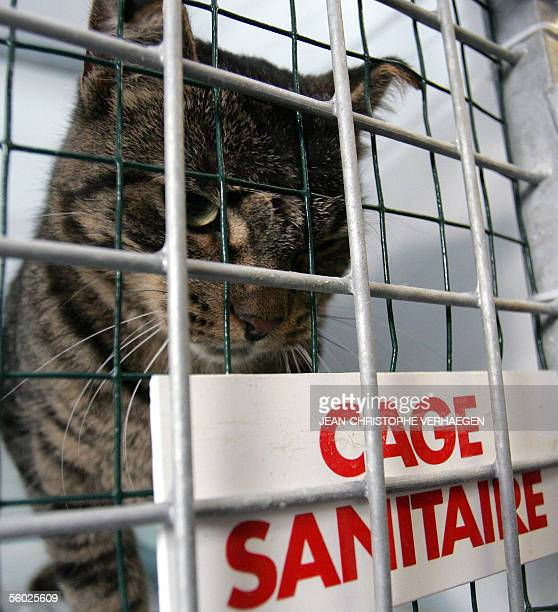 Velaine-en-Haye, FRANCE: Picture taken 28 October 2005 shows Emily, a cat that travelled for 30 days all the way from America in a container without...