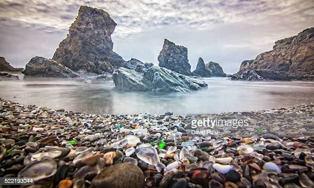 velella- velellas on glass beach, fort bragg, ca. usa - fort bragg stock pictures, royalty-free photos & images