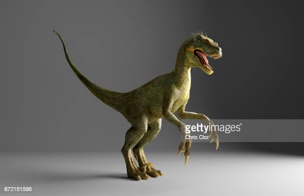 Velociraptor dinosaur standing on gray background