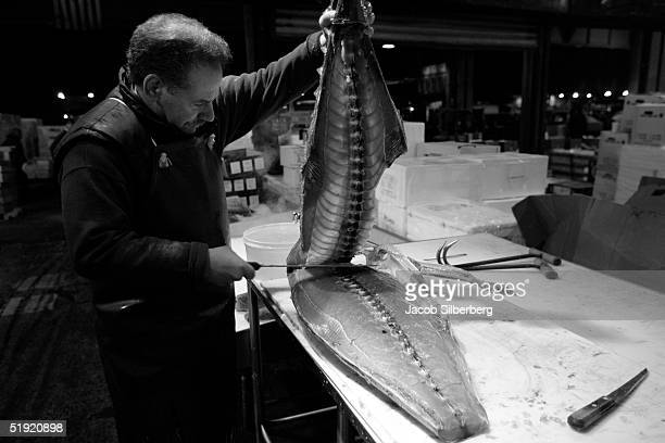 A vender fillets a tuna fish December 29 2004 at the Fulton Fish Market in New York City The fish will be filleted before being sold The market...