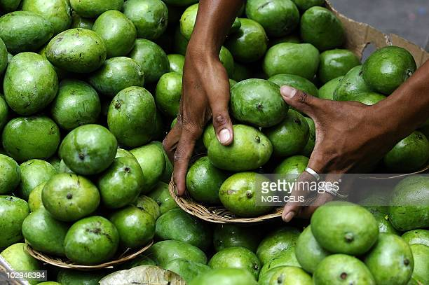 A vendor arranges green mangoes near the Quiapo Church in Manila on March 26 2010 AFP PHOTO/NOEL CELIS