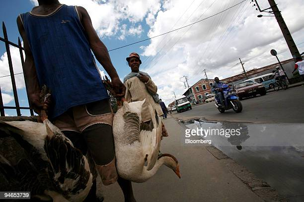 A vendor carries geese to a local market to sell in Antananarivo Madagascar Monday December 4 2006 Poverty in Madagascar is wide spread with an...