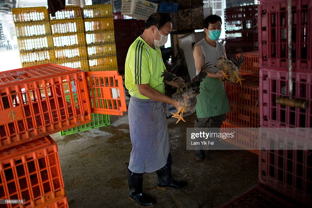 A vendor carries live chickens at the Wholesale Poultry Market in Cheung Sha Wan on April 12, 2013 in Hong Kong. Local authorities have stepped up the testing of live poultry imports from China to include a rapid test for the H7N9 'bird flu' virus. Measures were put in place as the tenth victim of the influenza strain was confirmed in mainland China yesterday.