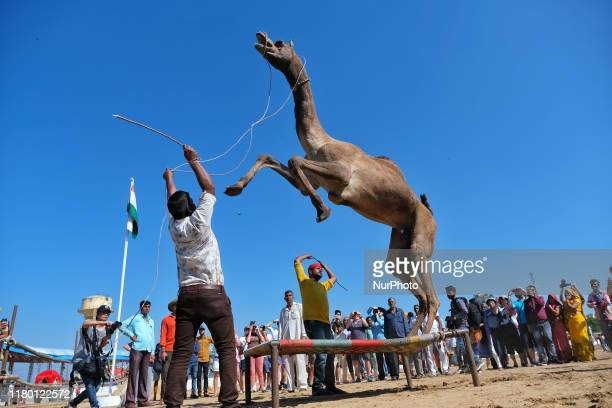 Vendor perform with his camel during the Pushkar Fair Rajasthan India Nov 05 2019 Thousands of livestock traders from the region come to the...