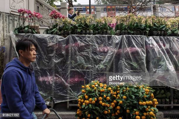 A vendor pushes potted kumquat plants on a cart at a flower market ahead of Lunar New Year in the Mong Kok district of Hong Kong China on Wednesday...