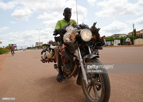 A vendor rides his bike as he hawks his chickens in Ouagadougou on September 23 as Muslims prepare for the upcomimg Muslim Eid AlAdha or the Feast of...