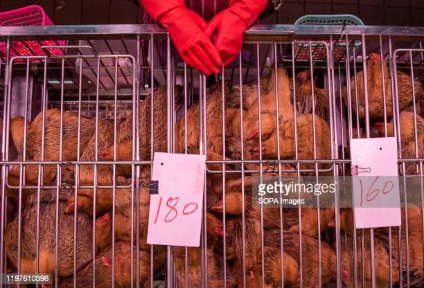 A vendor selling live stock chickens at a food market stand in Hong Kong Since the start of the coronavirus outbreak the death toll now stands at 170...