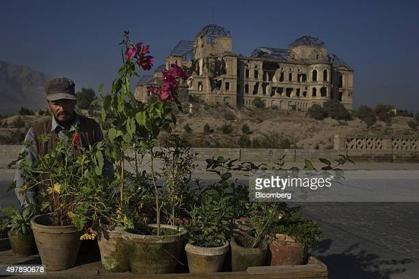 A vendor sells flowers outside the ruins of the iconic Darulman Palace former home of the Afghan king which was damaged in the civil war in Kabul...