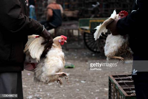 Vendor shows chickens to customers at the Ghazipur poultry market amid bird flu scare , on January 9, 2021 in New Delhi, India. At least six Indian...