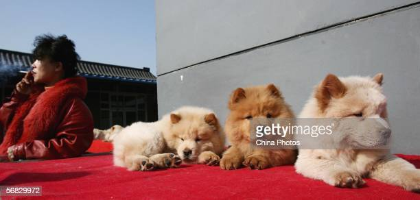 Vendor smokes as she sells Chow Chow puppies at a pet market on February 11, 2006 in Beijing, China. According to state media, with the country's pet...