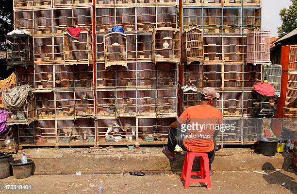 A vendor waits for customers besides cages filled with birds at the Jatinegara bird market in Jakarta Indonesia primates owls otters snakes and other...