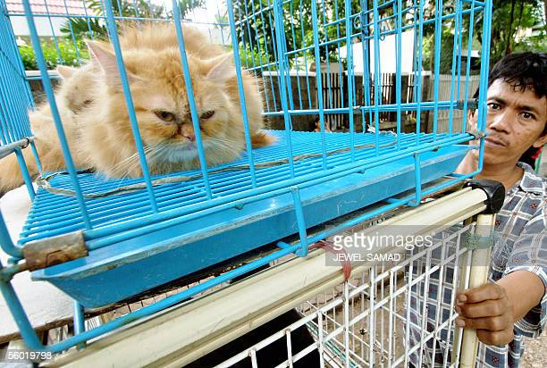 A vendor waits for customers standing next to a cage of a cat at his roadside pet stall in Jakarta 27 October 2005 Indonesia's human bird flu...