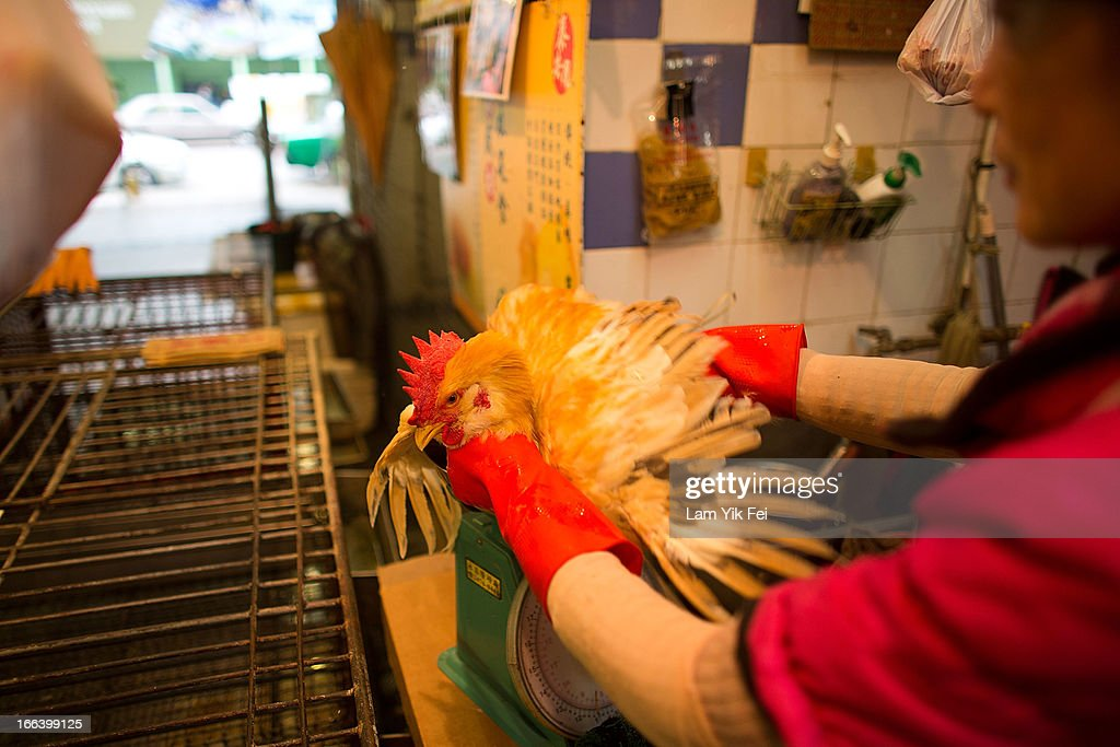 A vendor weighs a live chicken at the Kowloon City Market on April 12, 2013 in Hong Kong. Local authorities have stepped up the testing of live poultry imports from China to include a rapid test for the H7N9 'bird flu' virus. Measures were put in place as the tenth victim of the influenza strain was confirmed in mainland China yesterday.