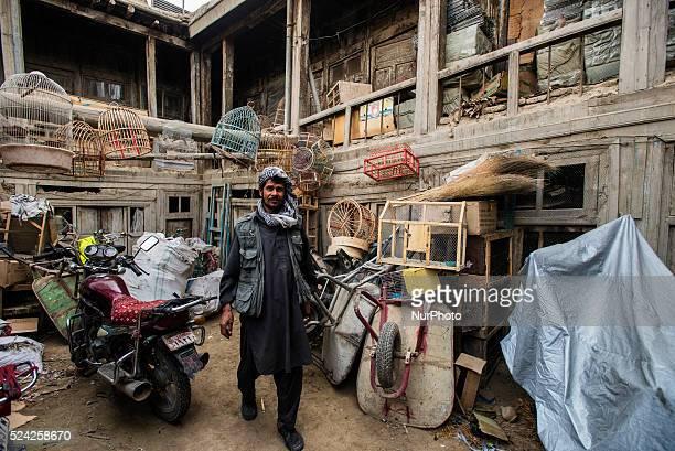 Vendor works at backyard of birds market in Kabul Afghanistan