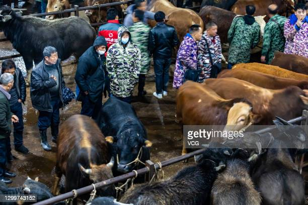 Vendors and buyers gather at a cattle market on February 1, 2021 in Xiangxi Tujia and Miao Autonomous Prefecture, Hunan Province of China.