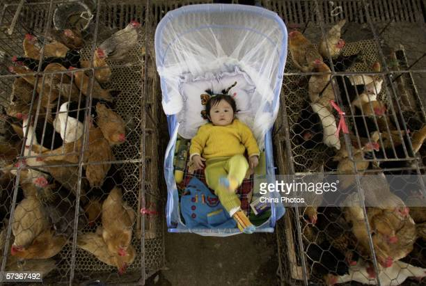 A vendor's baby lies in a bassinet beside chicken cages at a poultry wholesale market April 19 2006 in Wuhan Hubei Province China A 21yearold man a...