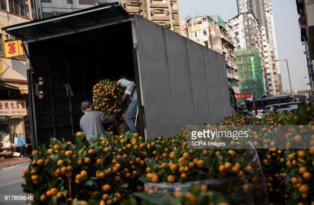 Vendors carry kumquat tree into delivery truck These adorn homes and offices across the city The former british colony of Hong Kong is preparing for...
