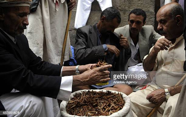 Vendors sell fried grasshoppers on July 23 2014 in Sana Yemen Grasshoppers invade in Sana become a opportunity for Yemeni farmers to make profit...
