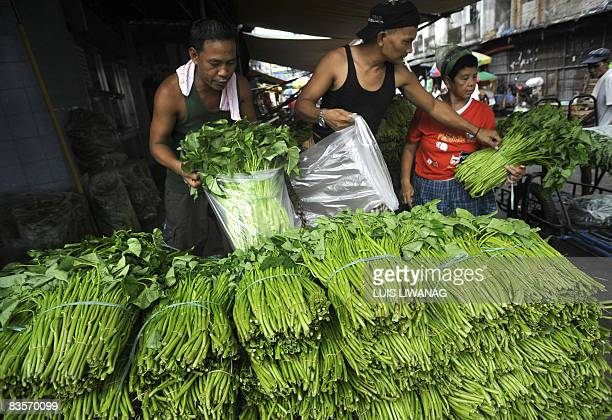 Vendors sort out vegetables for sale at the Divisoria market in Manila on October 20 2008 Rising cost of fuel and basic commodities are hitting...