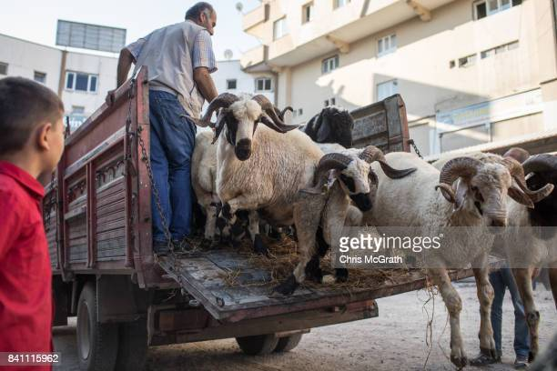 Vendors unload Sacrificial animals at a market during celebrations to mark the EidalAdha feast on August 31 2017 in Gaziantep Turkey Muslims around...