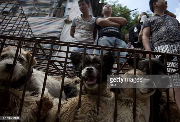 Vendors wait for customers to buy dogs in cages at a market in Yulin, in southern China's Guangxi province on June 21, 2015. The city holds an annual...