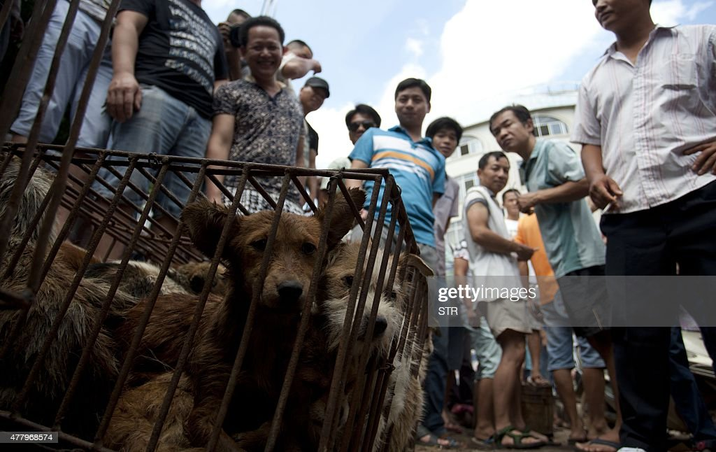 CHINA-ANIMAL-DOG : News Photo