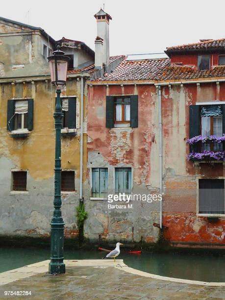 Venezia - Rio De S. Pantalon with Seagull