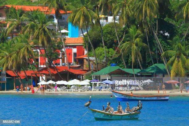 venezuela, margarita island. pelican, pampatar - margarita beach stock photos and pictures