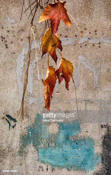 venice autumn leaves - mike caithness stock pictures, royalty-free photos & images