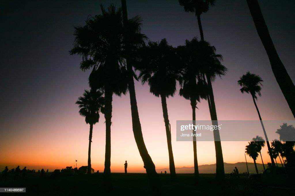 Venice Beach Sunset Venice Beach California Beach Sunset Beach Sunset Background Palm Trees Sunset Purple Sunset Palm Tree Silhouette High Res Stock Photo Getty Images