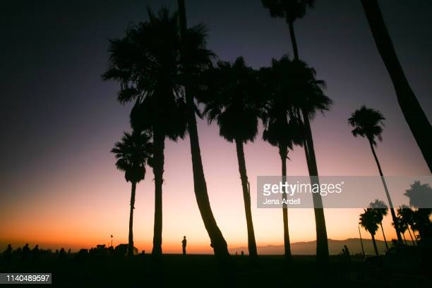 venice beach sunset, venice beach california, beach sunset, beach sunset background, palm trees sunset, purple sunset, palm tree silhouette - los angeles mountains stock pictures, royalty-free photos & images