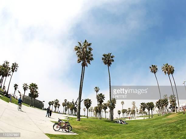 Venice Beach With Palm Trees