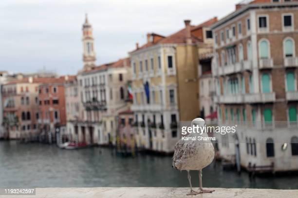 venice in background of a pigeon - canale foto e immagini stock