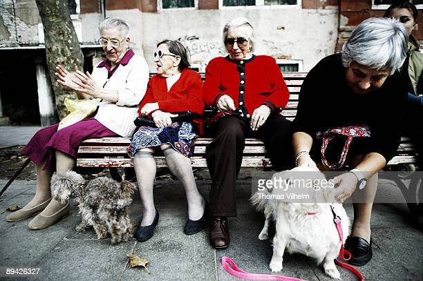 Venice Italy Elderly women sitting in a bench with dogs