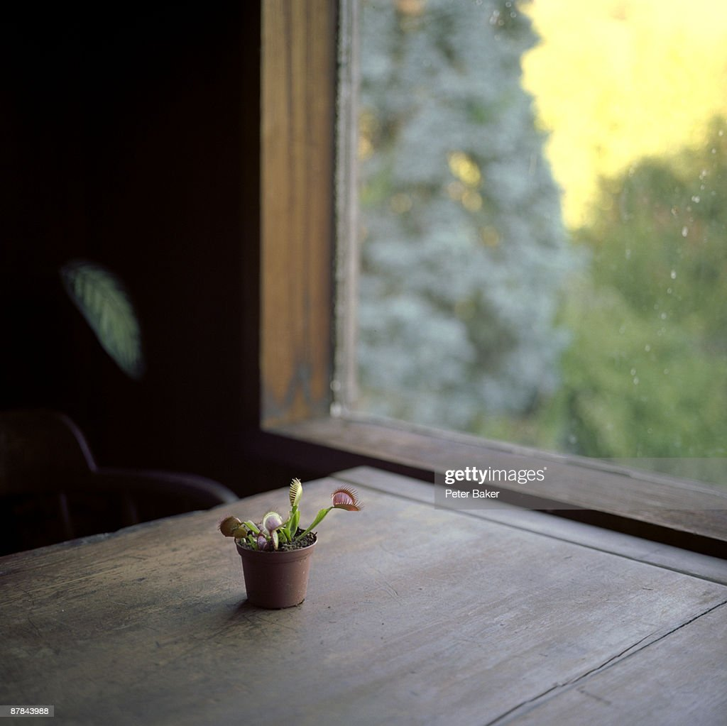 Venus Fly Trap on a Table : Stock Photo