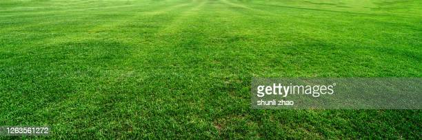 verdant meadow in summer - lawn stock pictures, royalty-free photos & images