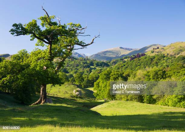 verdant rural landscape near skelwith bridge, elterwater, lake district national park, cumbria, england, uk - june stock pictures, royalty-free photos & images