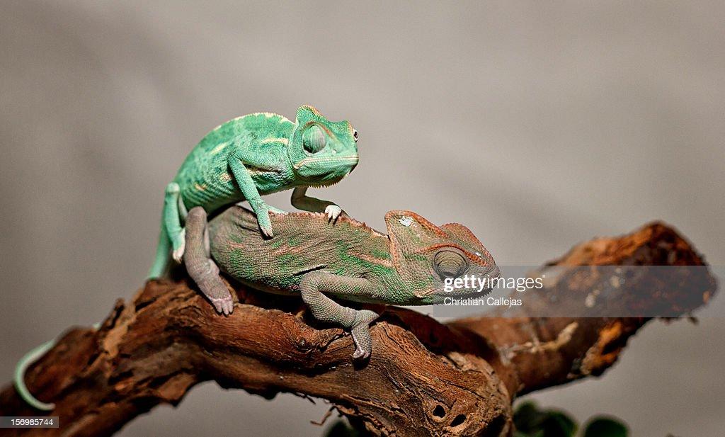 Verde de placer ;) : Stock Photo