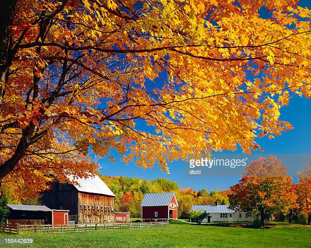 Vermont autumn foliage, rural New England countryside, barn, farm buildings