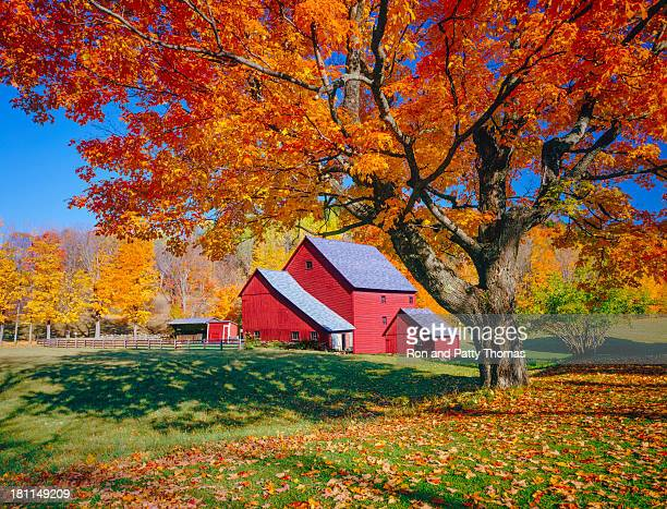 vermont autumn with rustic barn - maple tree stock pictures, royalty-free photos & images
