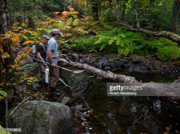 Vermont Fish and Wildlife Department employee, Tony Smith, left, searches a pool of fresh water for native brook trout with a low-voltage stun pole...