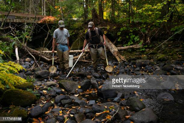 Vermont Fish and Wildlife Department employee, Tony Smith, right, searches a pool of fresh water for native brook trout with a low-voltage stun pole...