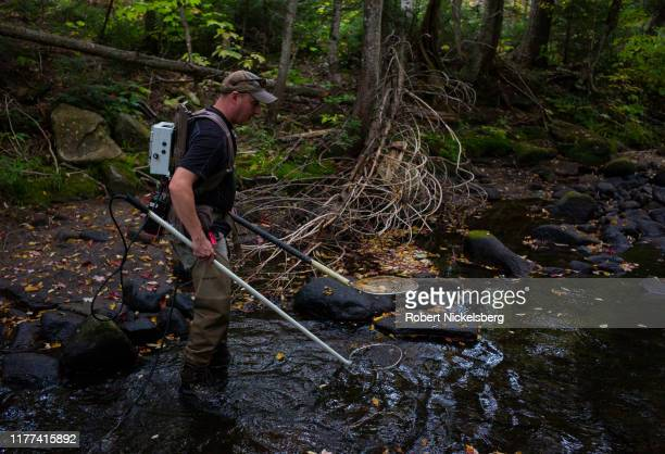 Vermont Fish and Wildlife Department employee Tony Smith searches a small pool of fresh water for native brook trout with a low-voltage stun pole...