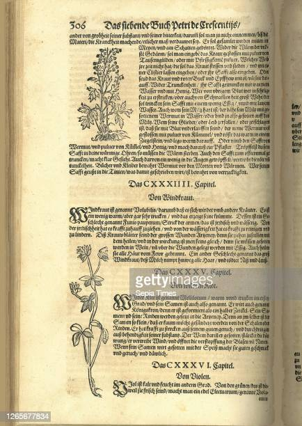 Vermouth and wild clover, Garden plants, woodcuts, Fig. 10, p. 306 Petrus de Crescentiis: New Feldt und Ackerbaw: darinnen ordentlich begriffen wie...