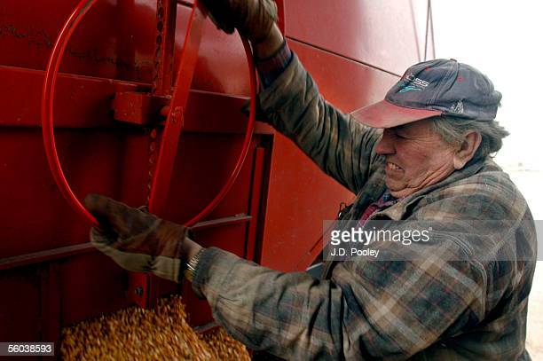 Vern Panning strains while loosing a door to dump corn into an elevator October 31 at The Deshler Farmers Elevator Company's Custar elevator located...