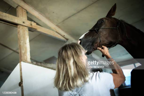 Veronique de la Brelie tries to calm down her horse Cimona, after it has been attacked on July 9, at her property, in Criquetot-sur-Logueville, on...