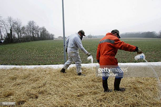 Members of veterinary services pour down sodium carbonate 24 February 2006 in Versailleux at one of the two security control checkpoints near...