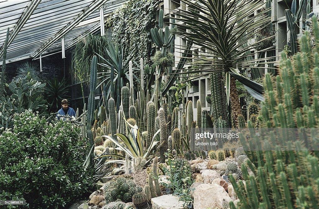 Verschiedenartige Kakteen Im Gewachshaus Im Alten Botanischen Garten