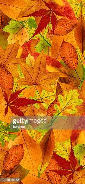 Vertical fondo de otoño